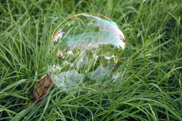 Big soap bubble lying in the grass