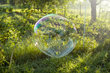 Big soap bubble flying in the air