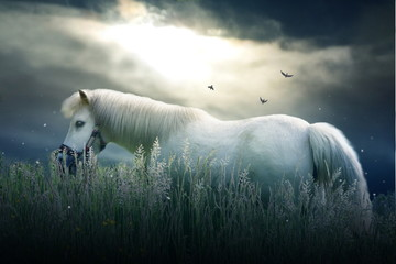 Small white pony with dramatic sky