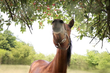 Horse eating from tree