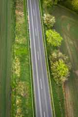 Asphalt road with green trees on the roadside