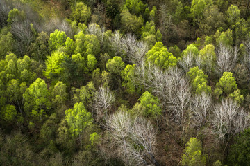 Forest seen from above with green and white trees