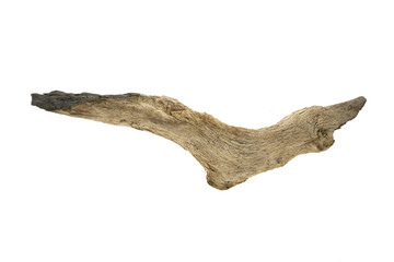 snag driftwood isolated on white background.Old  tree Wall mural