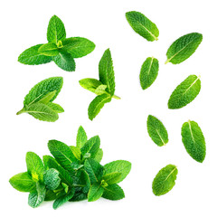 Acrylic Prints Aromatische Fresh mint leaves collection isolated on white background, top view. Close up of peppermint.