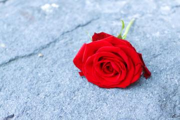 Fallen red rose on the floor