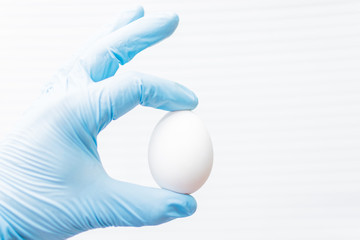 Checking the egg. A hand in a glove holds a chicken egg.