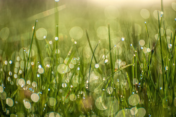 Close up macro image of bright light green grass growing on blurred green bokeh background on sunny spring morning