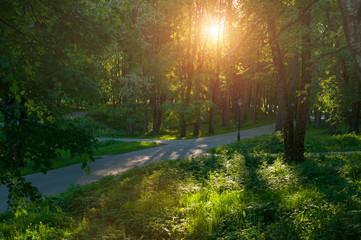 Sunny summer landscape - summer park alley under soft sunset light