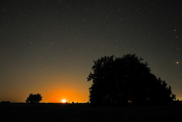 Night in countryside. Trees at field and moon rise