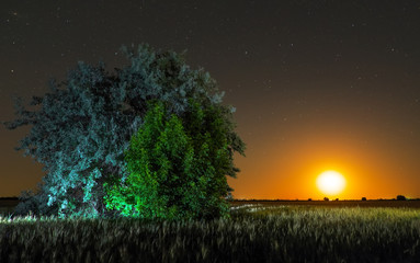 Night in countryside. Alone tree at field and moon