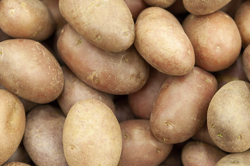 Tubers of red pure potatoes in the shop window.