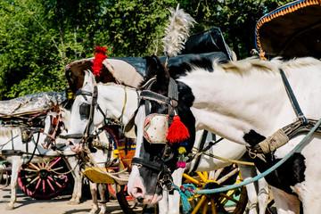 horse carriage, India, Agra