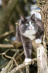 cute grey kitten climbing in trees