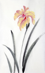 pink orange iris