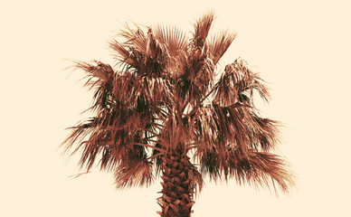 Tinted photograph of a palm tree on a pale yellow background
