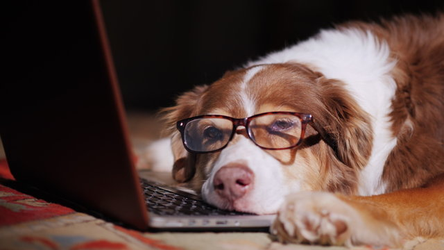 A dog in glasses sleeps near a laptop.