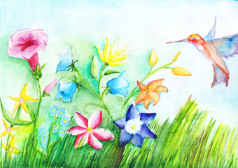 Field beautiful flowers and hummingbirds on watercolor drawing. Copy space