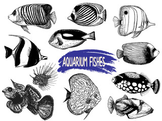 Set of hand drawn sketch style tropical fish isolated on white background. Vector illustration.