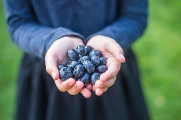 Blueberries IV