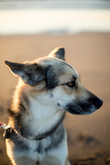 Portrait of Mixed Breed Dog on Beach