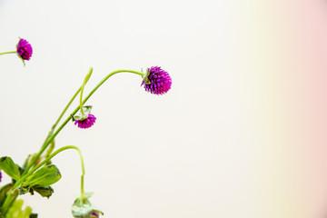 Closeup of pretty purple flowers
