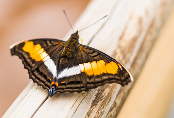 Close up macro photography of a colorful butterfly