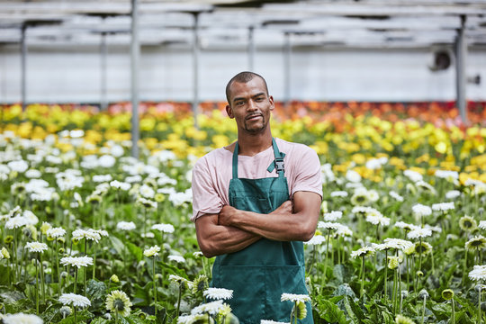 Confident Florist Standing Arms Crossed Amidst Gerbera Daisies I