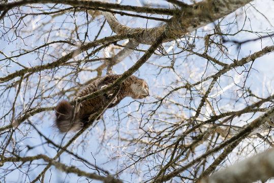 cat up in tree