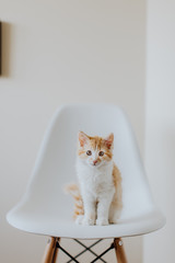 Cute cat sitting on chair