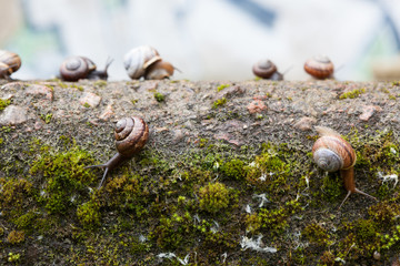 Group of small snails in urban setting