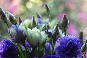 Bunch of Purple Lisianthus