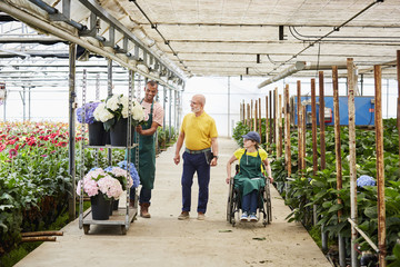 Florists Examining Hydrangea Pots In Greenhouse