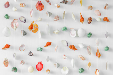 Variety seashells hanging isolated on the white wall