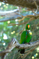 Green parrot standing in a tree