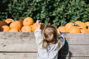 Toddler grabbing a pumpkin