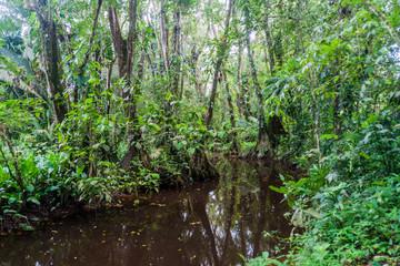 Small creek in Cockscomb Basin Wildlife Sanctuary, Belize.