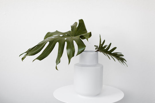 Large green leaves in white vase with white background