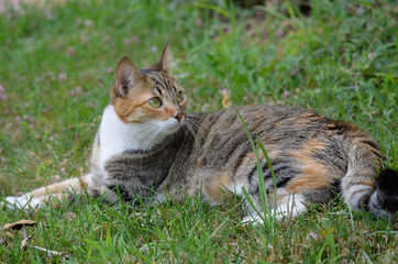 cat resting in grass