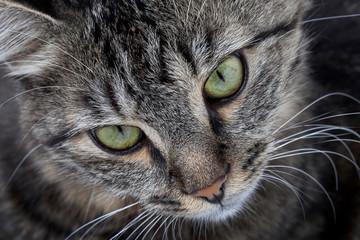 Close up head shot of a cat