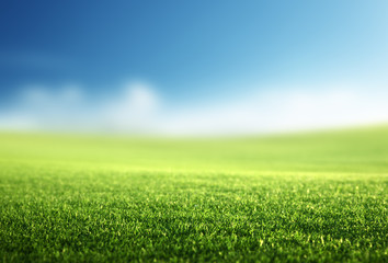 Foto op Canvas Gras field of spring grass (shallow DOF)