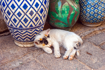 Cute Baby cat sleeping next to a traditional blue patterned vase. Old Medina of Fes, Morocco. Close-up.