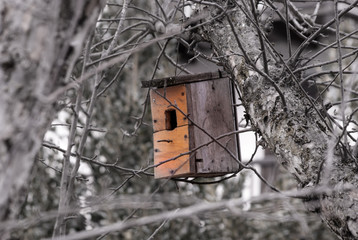Little nest for birds