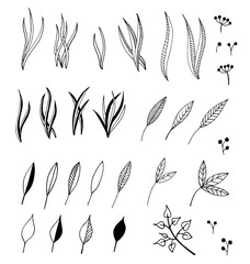 Hand drawn illustration of branches and leaves. Design elements