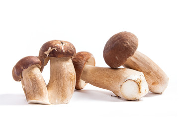 Several porcini mushrooms known as boletus edulis isolated on white background.