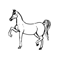 Hand drawn sketch of horse. Black line drawing isolated on white background. Vector animal illustration.