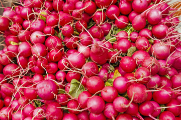 A full frame closeup of farm fresh and organic radishes on display at a farmers market.