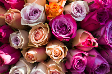 Bouquet of roses background