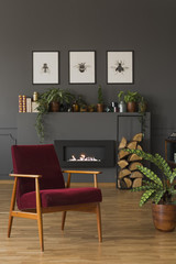 Dark red wooden armchair next to plant in grey living room interior with posters. Real photo