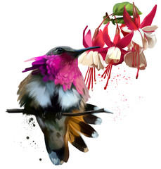 Hummingbirds and red flowers watercolor drawing