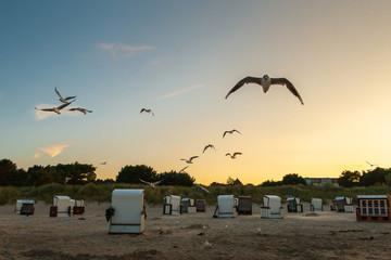 Möwen (Laridae) fliegen am Himmel über der Ostsee. Insel Usedom. Selektiver Fokus und geringe Tiefenschärfe.